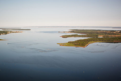 Aerial view of body of water. Small inlets and land protrusions appear on the left and right side of the picture. Oyster leases are visible in the centre of the picture and to the right. They appear as a series of floating buoys and gear.