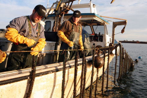 Two guys, dressed in rain gear, ball caps and yellow gloves, are standing on the side of a large fishing vessel tying mussel shellfish socks onto a longline that has been raised out of the water using a hydraulic crane.