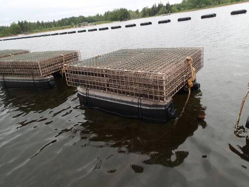 Close-up of two large oyster cages. They appear as a large wire structure that is out of the water and resting on two large black floats.
