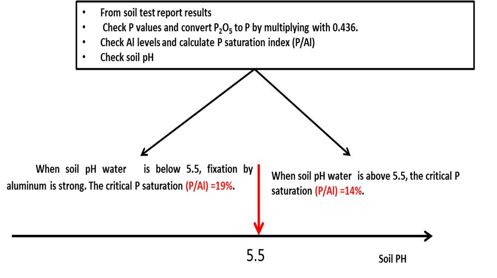 Diagram showing how to calculate P saturation index from soil test reports