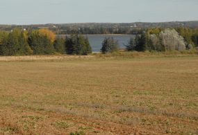 Buffer zone along waterway - ALUS PEI project