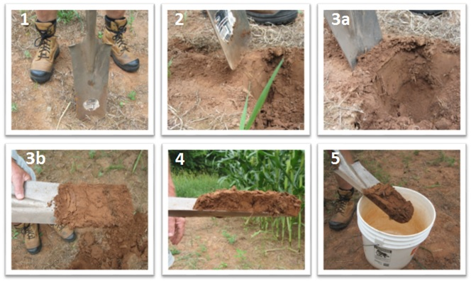 6 pictures of how to take a field soil sample as outlined in steps