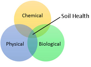 A graphic of three overlapping circles that illustrates that soil health focuses on three primary soil properties including the physical, chemical, and biological components and how they affect plant productivity.
