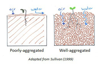 Two line drawings that illustrate poorly-aggregated soil and well-aggregated soil. The well-aggregated soil has spaces (or pores) between the aggregates which allows water and air to move through the soil. The poorly-aggregated soil does not and thus water runs off instead of being absorbed.