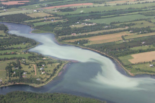 Anoxic Event Wheatley River - July 14, 2016