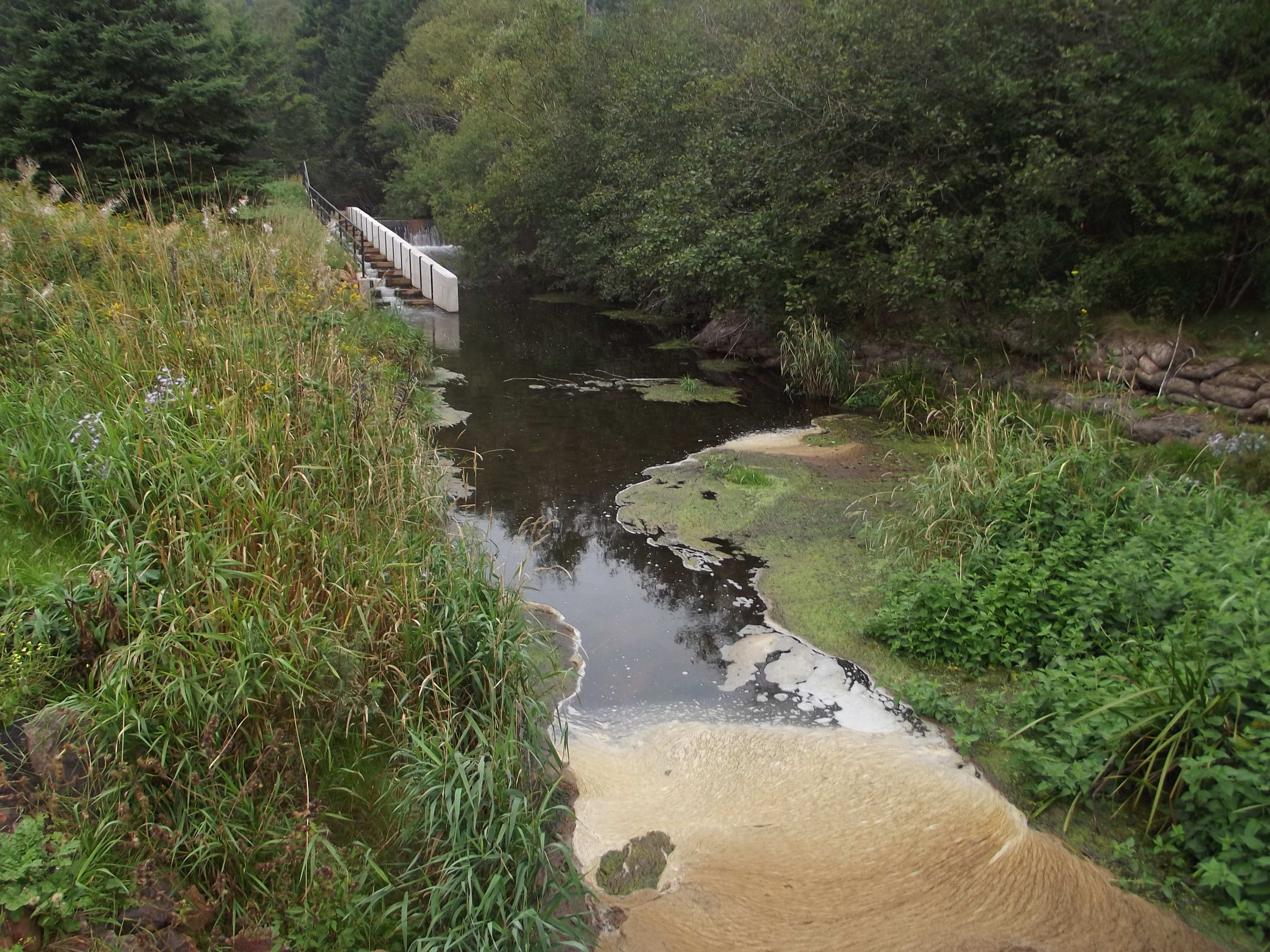 Foam in slow moving area below a culvert