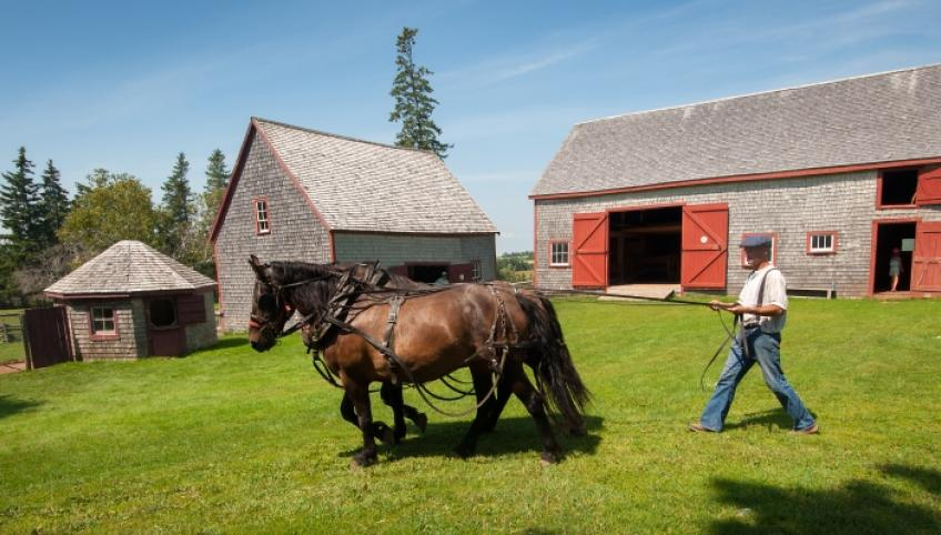 Image of man driving horse team at Orwell Corner Historic Village