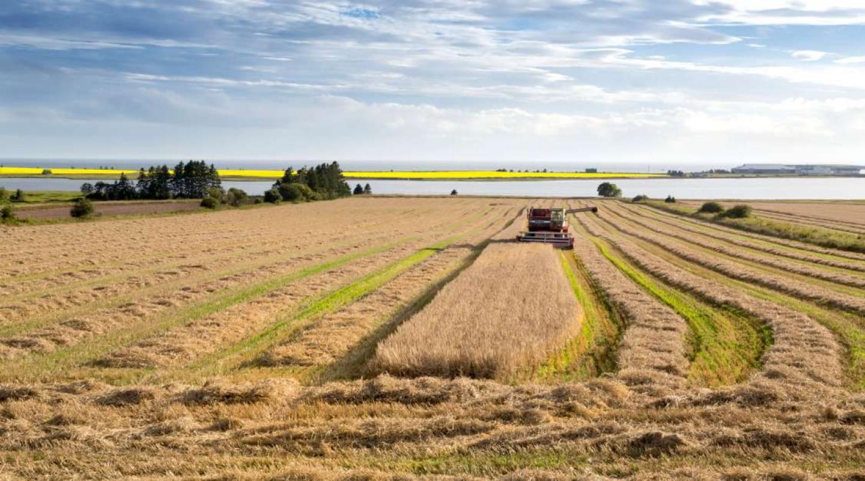 Combine harvesting field near Belmont, PEI