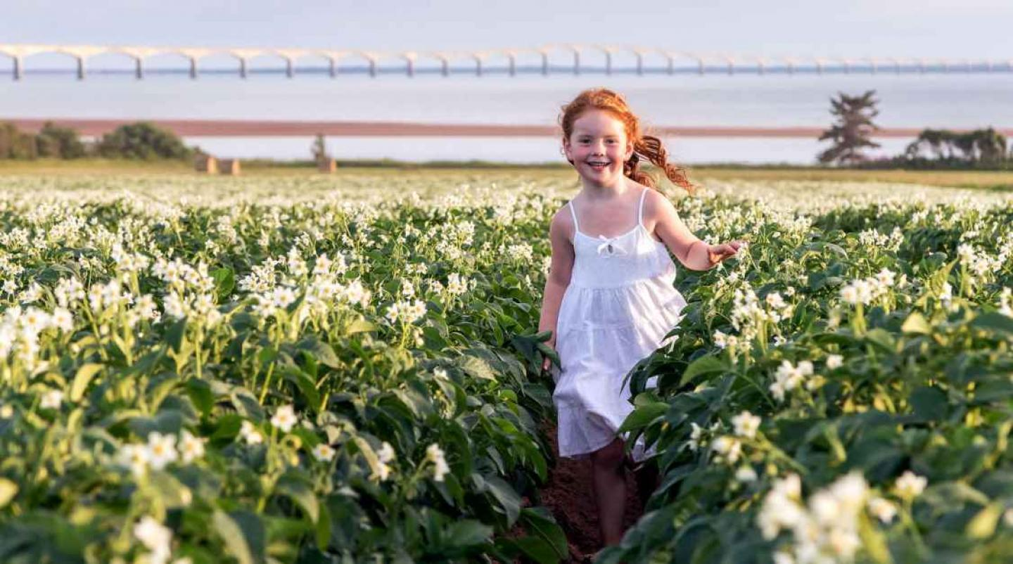 Young girl with red hair in field of potatos in bloom with Confederation Bridge in background