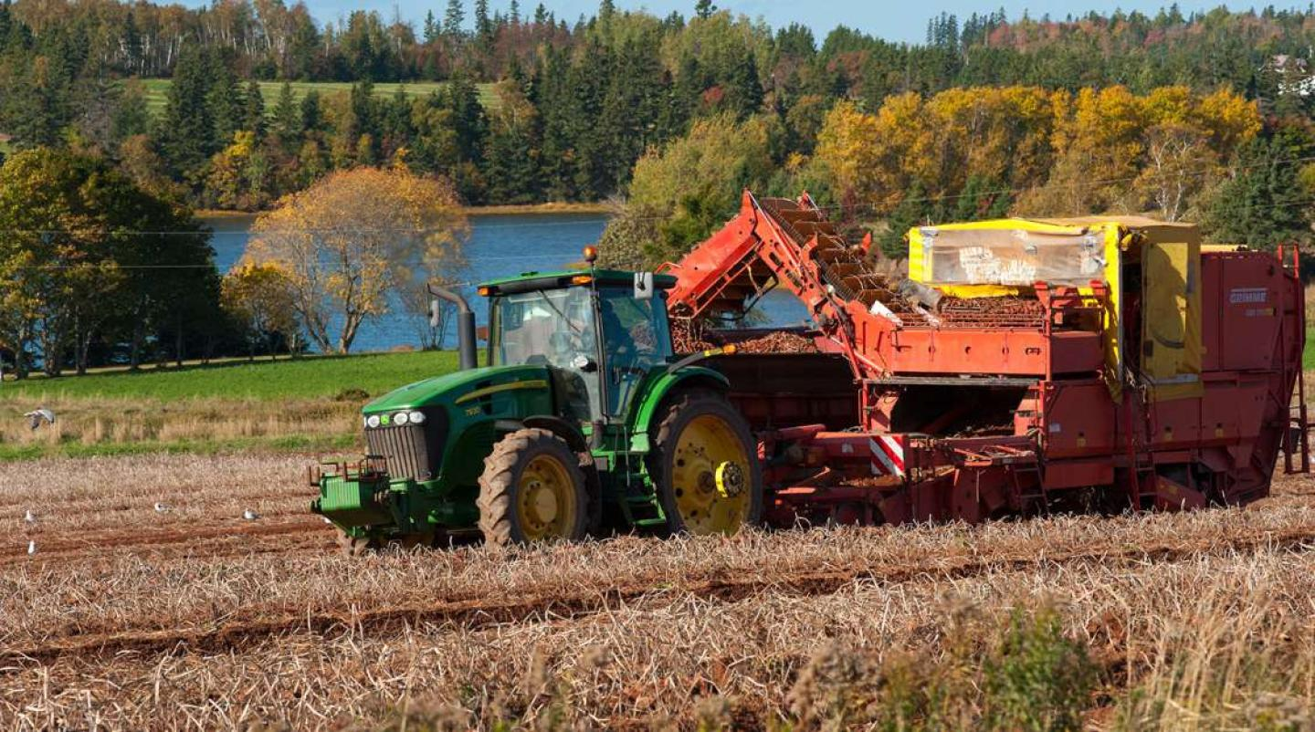 Potato harvest in field near Crapaud, PEI in autumn