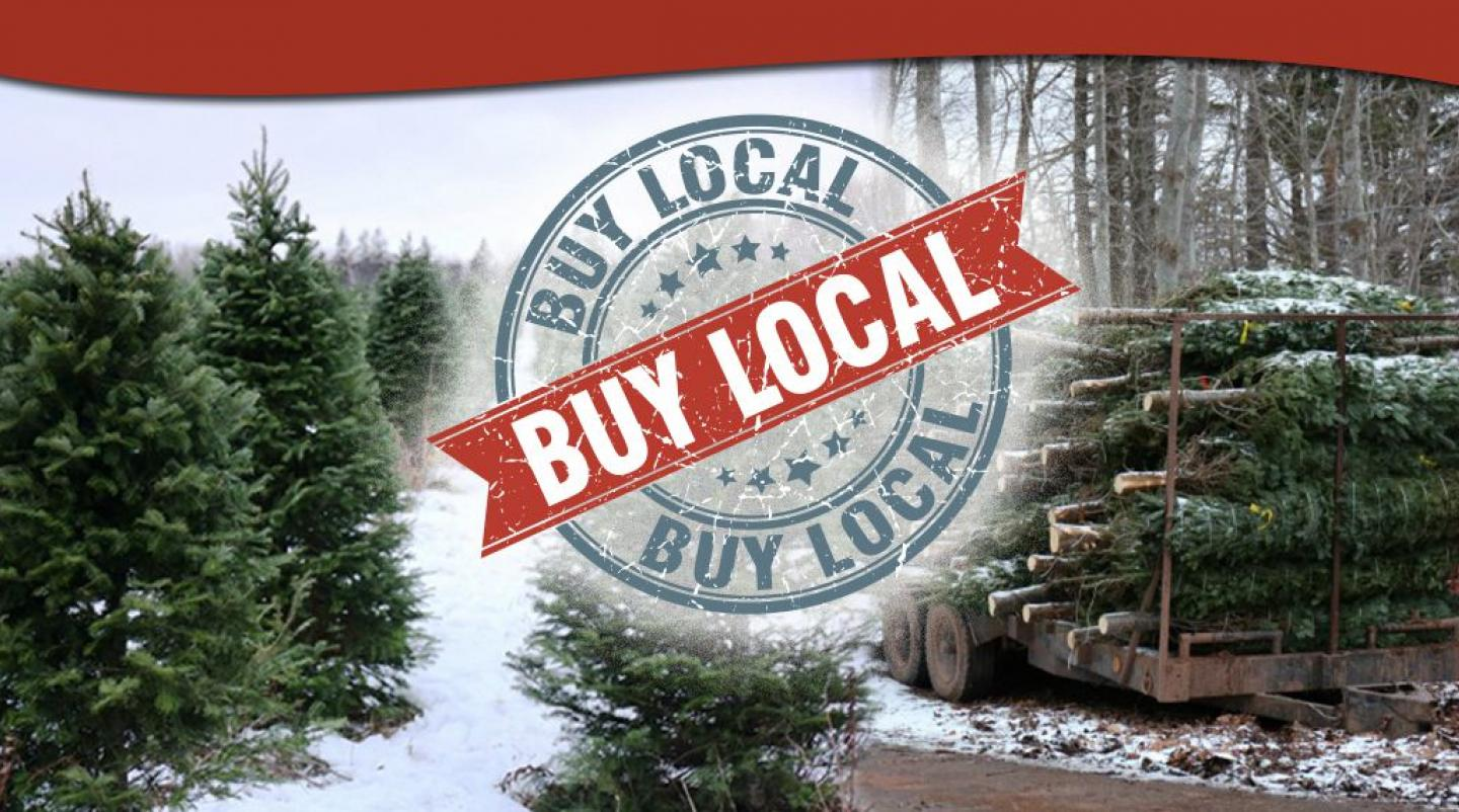 "Image of Christmas tree lot in Mayfield, PEI with graphic saying ""Buy Local"""