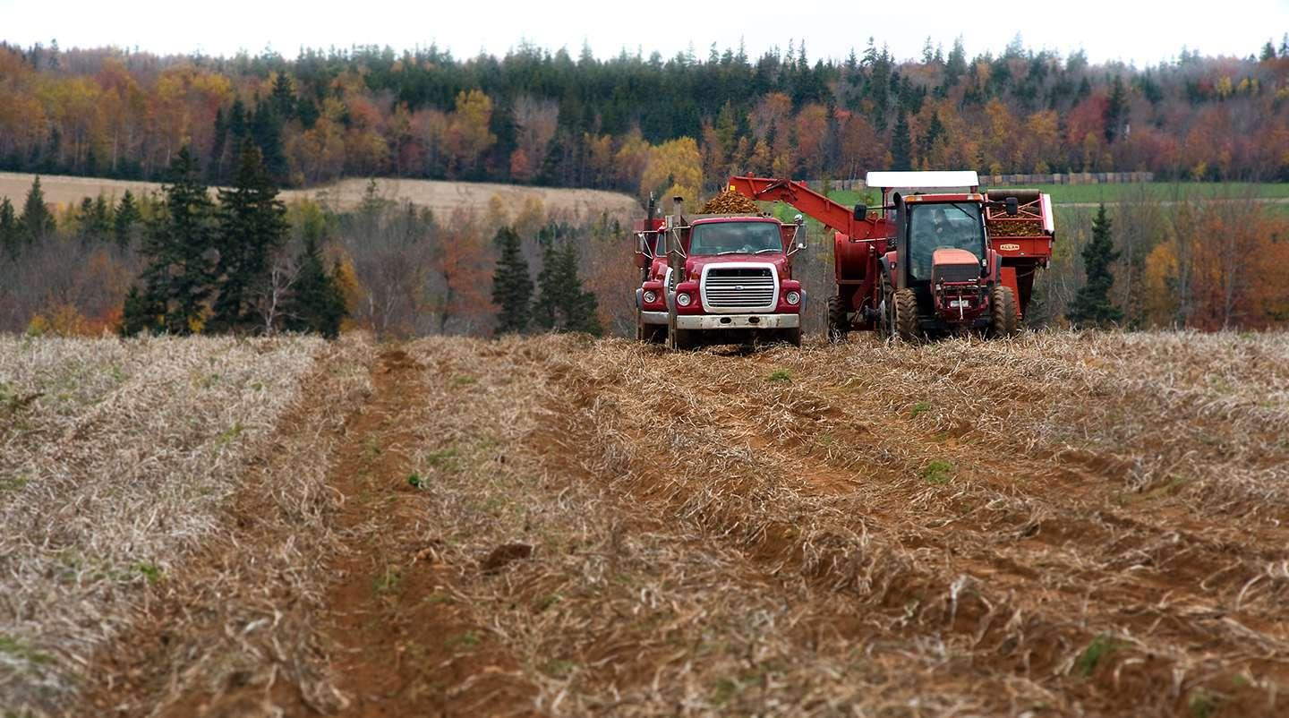 Potato harvest digger and tractor in field with fall foliage in background