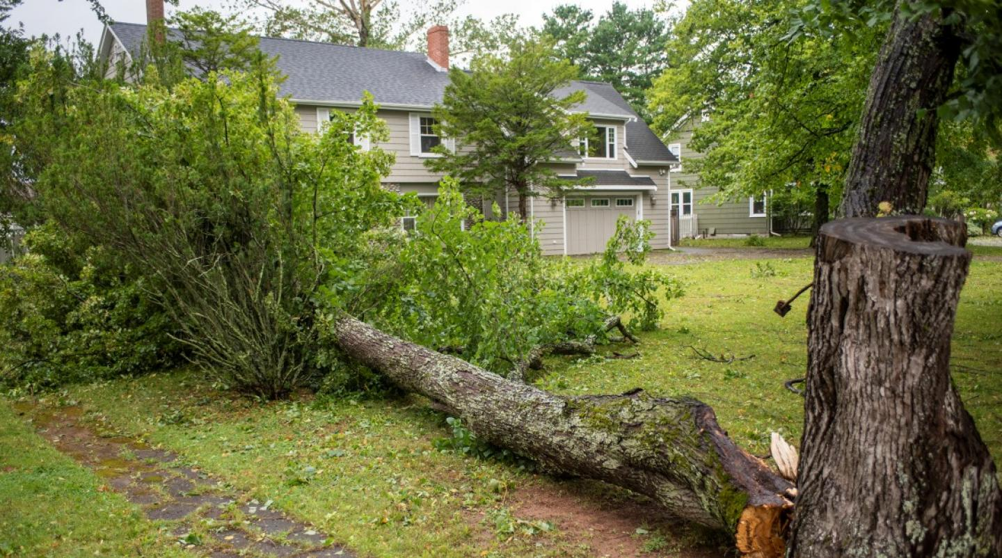 Image of fallen tree in front of home in Charlottetown