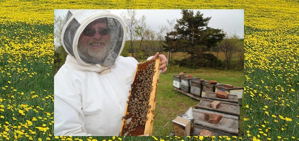 The photo shows beekeeper David MacNearny on a field of dandelions
