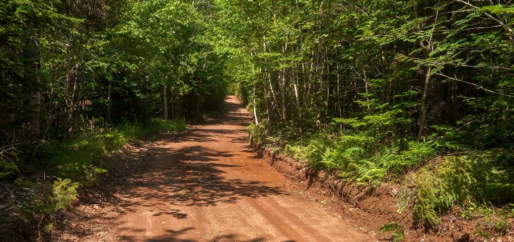 The photo shows a straight, wooded dirt road