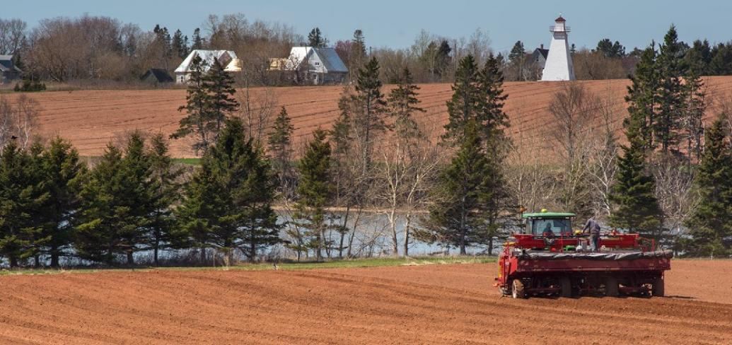 Image of machine planting potatoes in a field