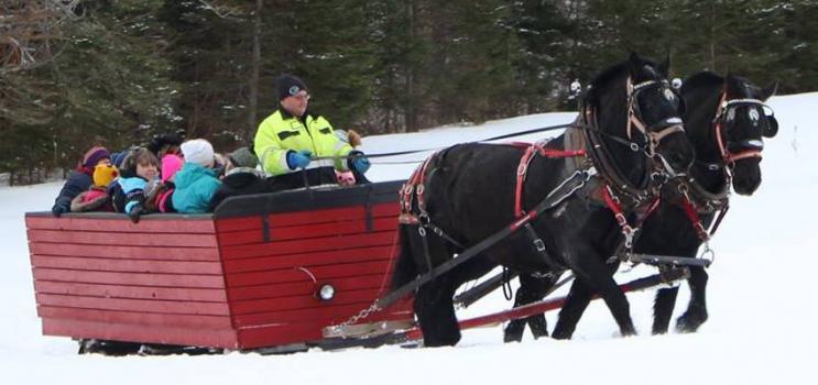 Horse and box sleigh at PEI Winter Woodlot Tour in Hazel Grove