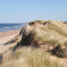 Image of dunes and a beach