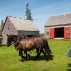 Image of man driving horse team at Orwell Corner Historic Village