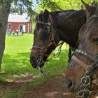 Deux chevaux dehors à Orwell Corner Historic Village
