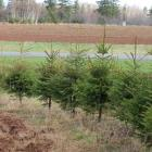 Hedgerow to illustrate Greening Spaces program