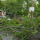 fallen tree in a yard