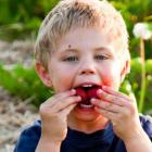 Young boy eating strawberries