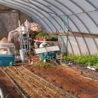 Sandy MacKay waters plants in his greenhouse