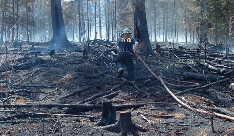 Firefighter managing PEI forest fire
