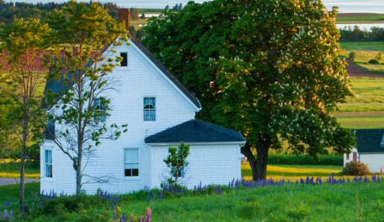 White farm house in scenic PEI community