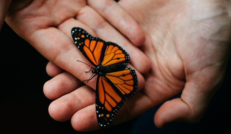 Picture of hands holding a beautiful black and orange butterfly