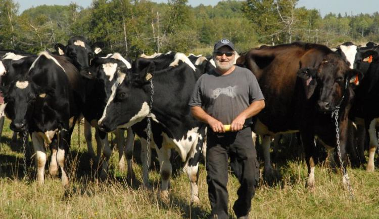 Johnny Gallant of le Ferme Gallant stands with a herd of dairy cows in a field