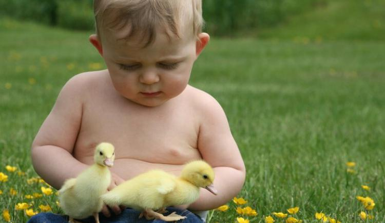 Baby sitting in field with ducklings