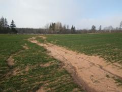 Photo of a dry stream bed through a planted field