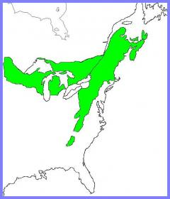 The Transition Forest Region map showing much of eastern North America