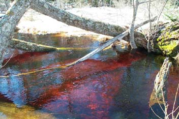 Photo of tannins in water